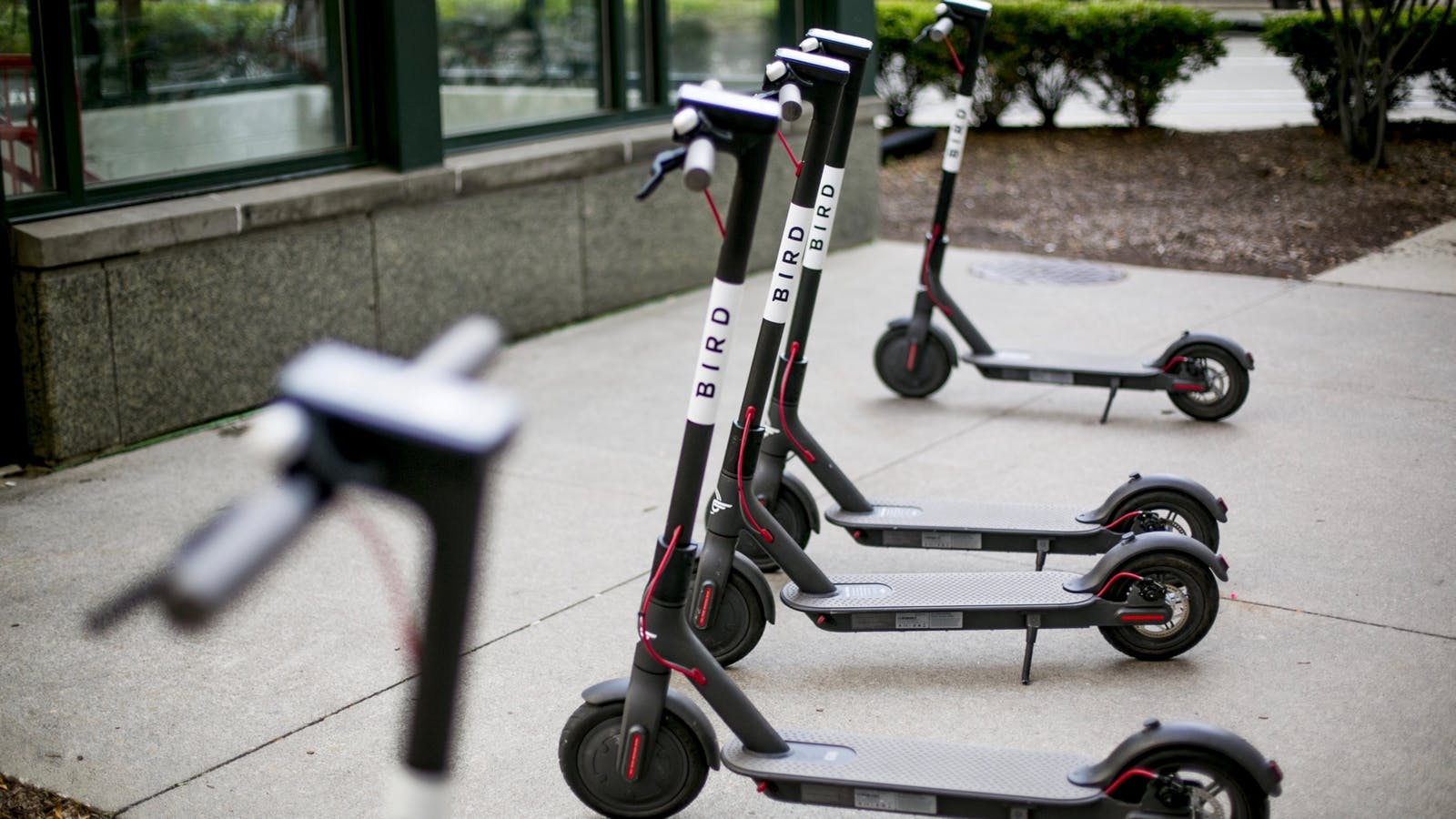 Bird scooters parked in Detroit. Photo: Bloomberg